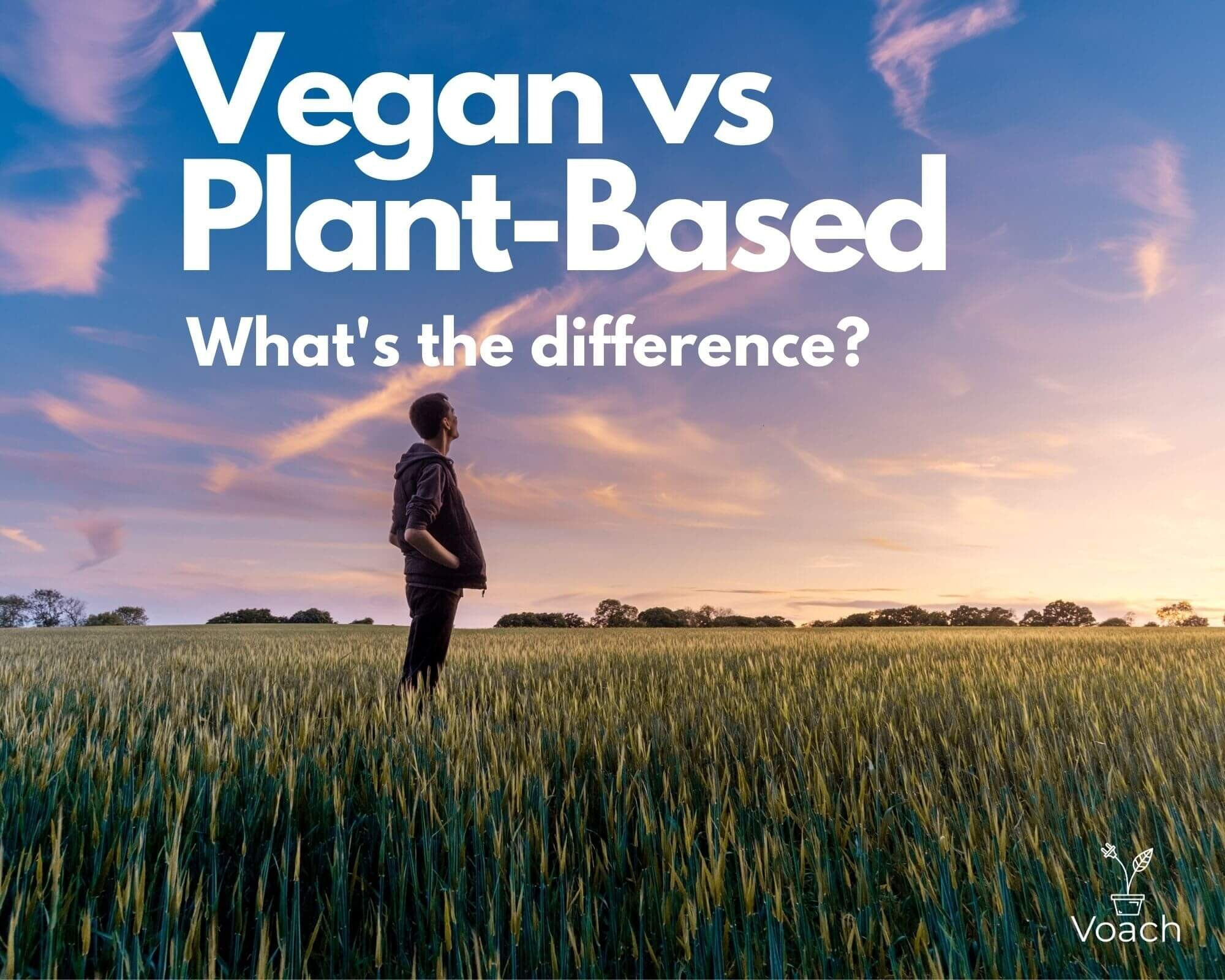 Vegan vs Plant-Based Diet: What's the difference? {2021}